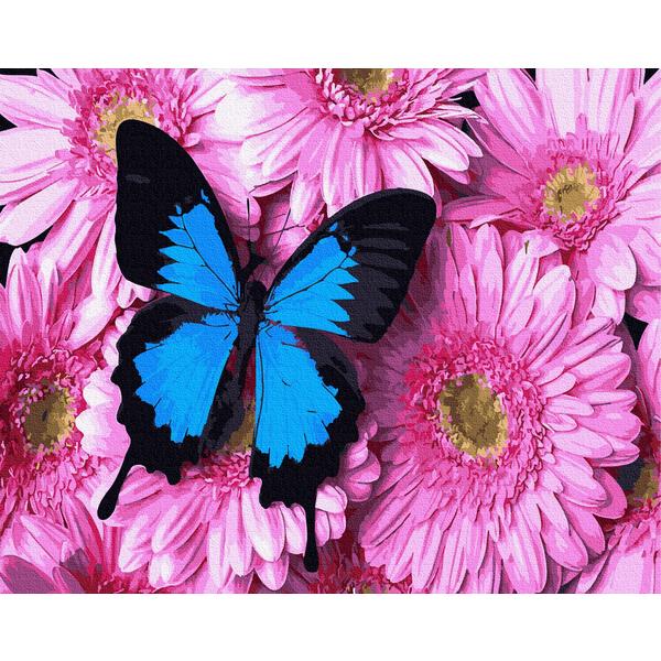 Картина по номерам Цветы - Метелик на рожевих хризантемах