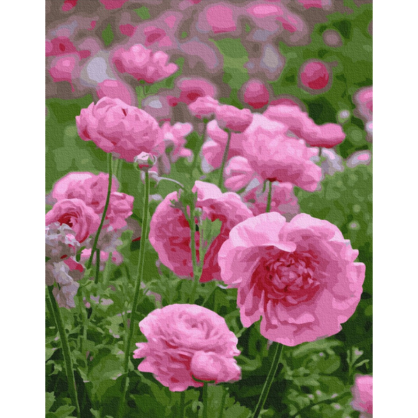 Картина по номерам Цветы - Розовая нежность