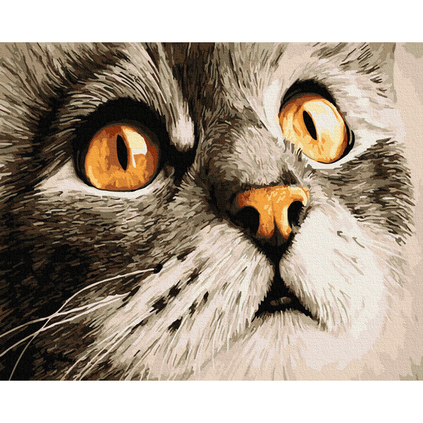 Картина по номерам Животные, птицы и рыбы - Погляд котика Сірка