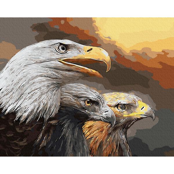 Картина по номерам Животные, птицы и рыбы - Орлиный взгляд
