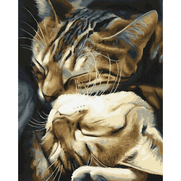 Картина по номерам Животные, птицы и рыбы - Спящие котики