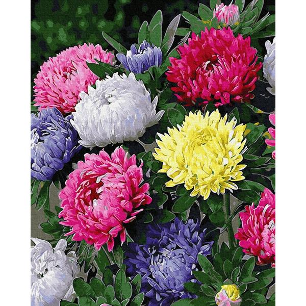 Картина по номерам Цветы - Різнобарвні айстри